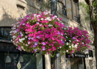 Annual Flower & Urban Garden Design and Installation Project in Stamford, CT
